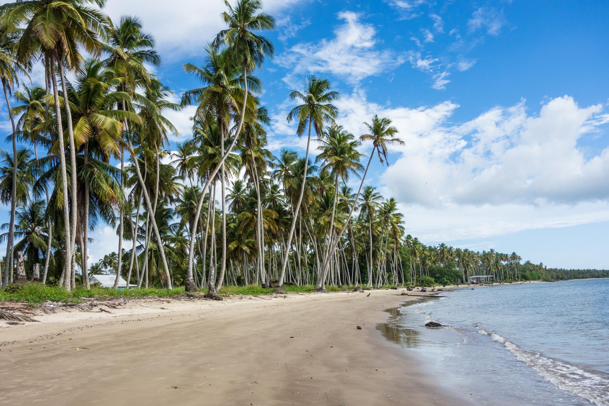 Caribbean Landscapes  Renata Ramasra